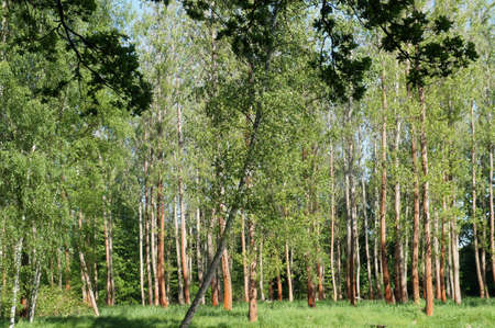 frhling: Laubwald im Frühling; Licht und Sonne, grünes Laub Deciduous forest in spring, light and sun, green foliage