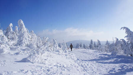 erzgebirge: Hikers on the Fichtelberg in the Erzgebirge, Germany, view to the Klinovec in Czech Republic, thick snowy spruces, blue sky Stock Photo