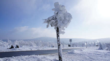 erzgebirge: Hikers on the Fichtelberg in the Erzgebirge, Germany, view to the Klinovec in Czech Republic, thick snowy spruces, blue sky and clouds