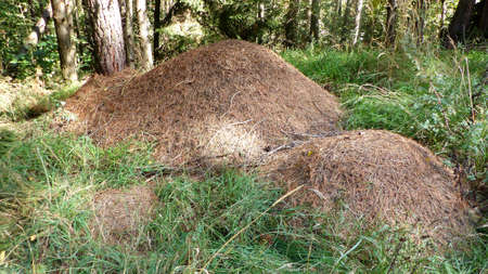 sized: Three different sized anthill in forest
