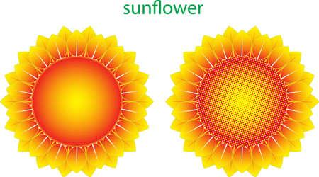 sun flower: Sun Flower