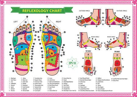 reflexologie: tableau de réflexologie