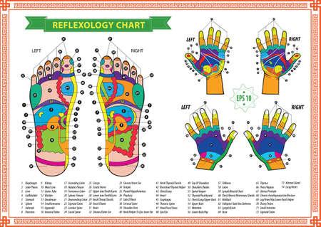 manicurista: gr�fico de reflexolog�a
