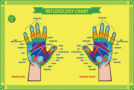 healing touch: Hand reflexology chart with accurate description of the corresponding internal and body parts. Vector illustration over white background, isolated. Illustration