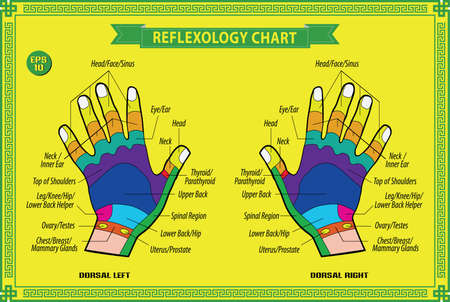 Hand reflexology chart with accurate description of the corresponding internal and body parts. Vector illustration over white background, isolated.
