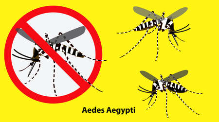 set of Aedes aegypti mosquito isolated. easy to modify