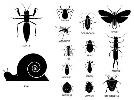 set of various insect in silhouette, with insect name. easy to modify Imagens