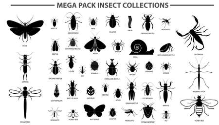 set of various insect in silhouette, with insect name. easy to modify Ilustração