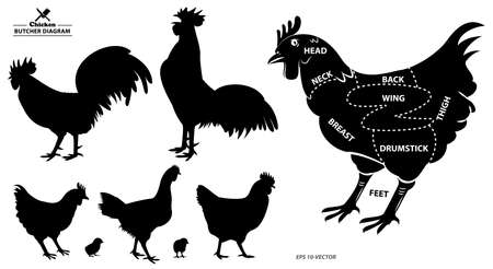 chicken silhouette or butcher diagram or part of hen butcher concept. easy to modify
