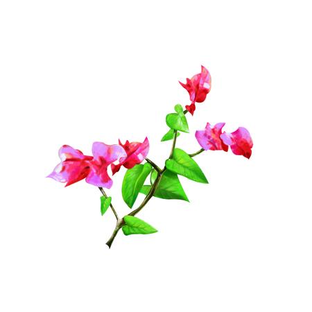 bougainvillea: Bougainvillea flower Stock Photo