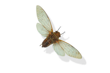 South American Moth photo