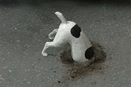 bury: Dog digging Stock Photo