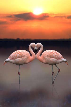 truelove: Flamingo Heart Concept