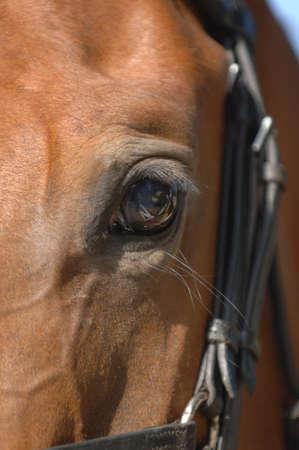 cavallo in corsa: Concorso Horse evento RDS luglio 2007