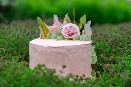Vegan layered vanilla sponge topped cake with a very light, fluffy buttercream which was flavored with blackberries and beets. Without animal products. On a background of thyme herb. Selective focus
