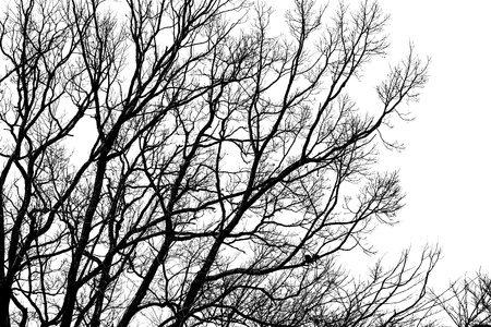 hibernate: Silhouettes branches  Trees to hibernate in the winter