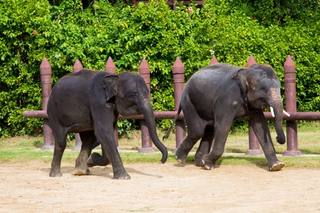 spacial: The two elephants  Sam Pran Fram, Thailand  Stock Photo