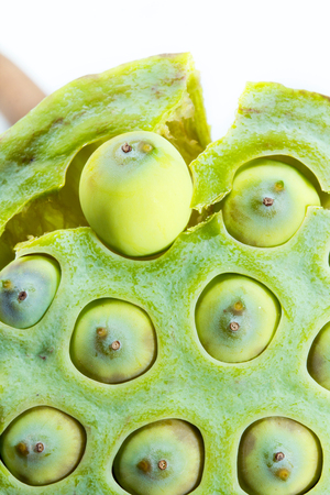 Seed lotus seeds are removed from the pod  photo