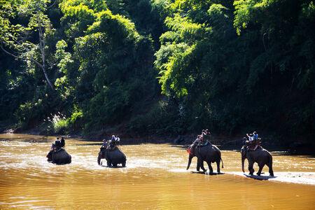 chiangrai: Tourists riding elephants nature, Chiangrai Thailand