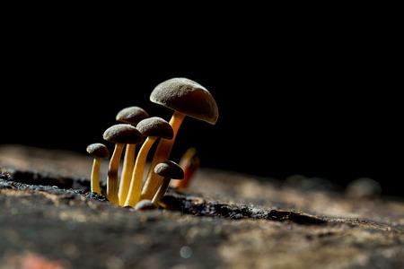 degradation: Collybia mushroom on tree. The natural degradation