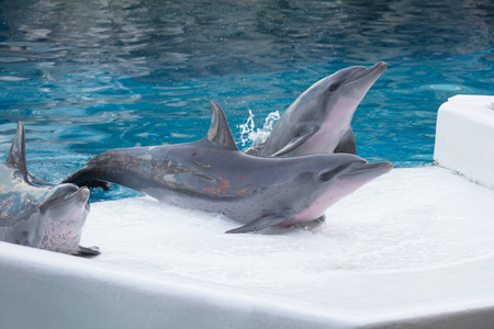 bottle nose: Dolphin show. Stock Photo