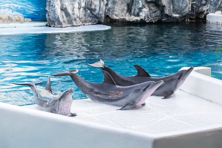 come up to: Three Dolphin come up on the land of the swimming pool. Stock Photo