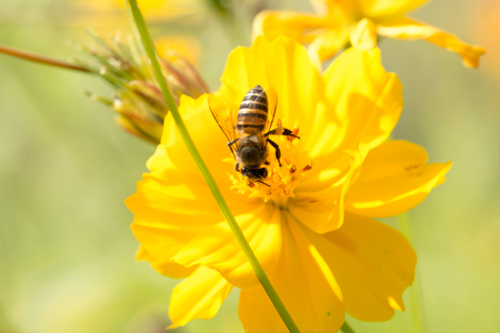 Bee on the flower. Stock Photo