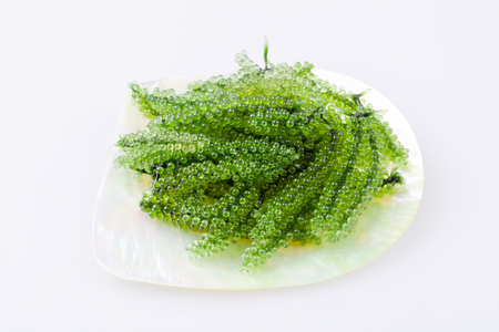 mother of pearl: Sea grape seaweed in the dish made from mother of pearl, Healthy sea food.