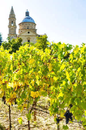 believes: Vineyard with the church of San Biagio of Montepulciano in Tuscany Stock Photo