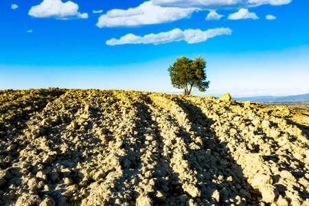 Farmland with tree in Tuscany Stock Photo