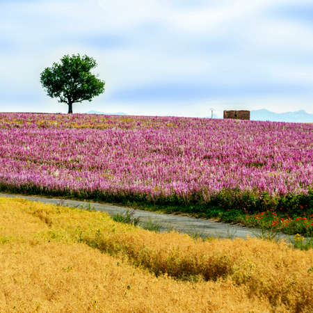 remedial: Herbs field in Provence