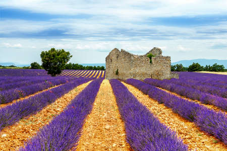 remedial: lavender field Stock Photo