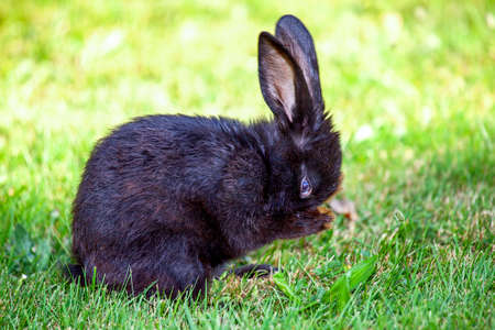 snugly: Young bunny in the meadow
