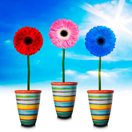 give out: Gerbera in the vase