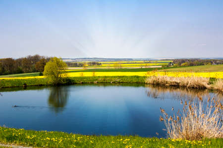 Spring landscape with pond and fields of rape