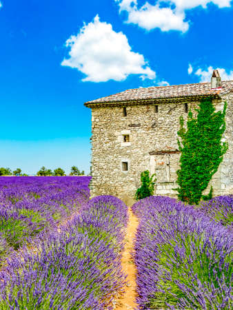 Landscape in Provence