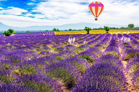 Blooming lavender field with hot air balloon