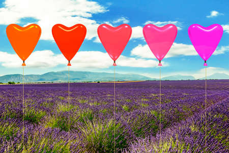 Blooming lavender field with hot air balloon  Stock Photo