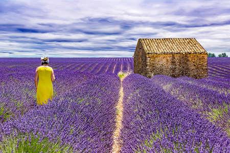 Woman in lavender field Stock Photo