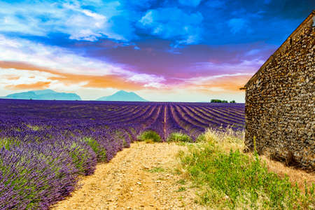 suns: Lavender field with old ruins