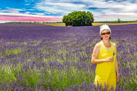 suns: Woman picking lavender flowers in lavender field Stock Photo
