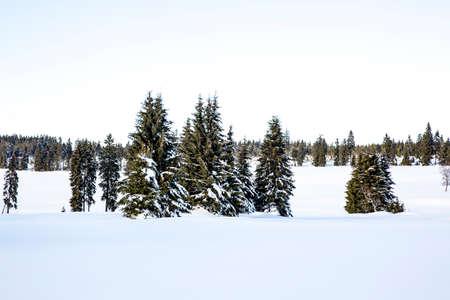 Winter scenery with snow Banco de Imagens