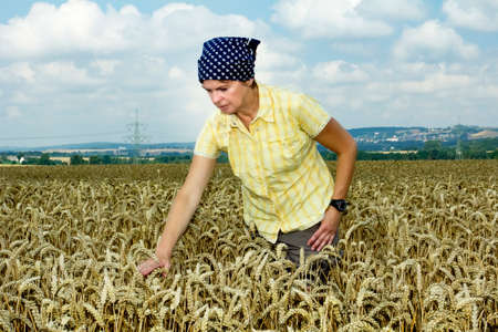 Farmer controlled her wheat field Stock Photo