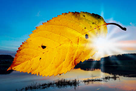 autumn colouring: Leaf flies through the air in autumn