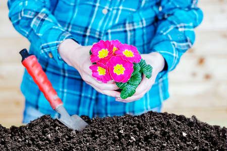 Woman at transplanting of flowers Stock Photo