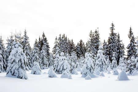 Winter scenery with snow  Stock Photo