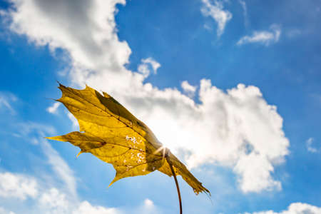 Leaf flies through the air in autumn