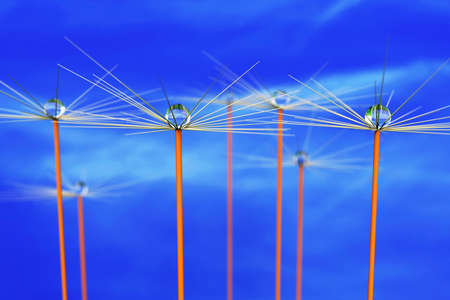 Flowered stalks with dew drops, 3d illustration