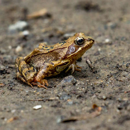 Frog on a walk