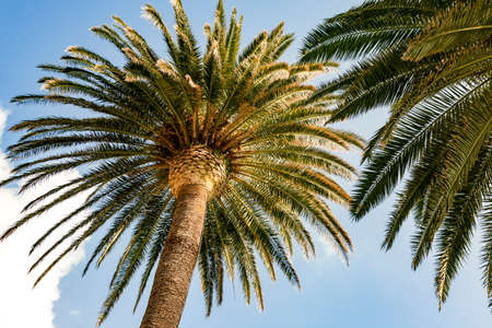 Palm tree on the Mediterranean